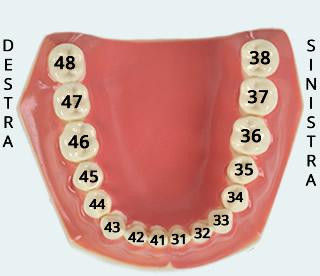 numerazione-dei-denti
