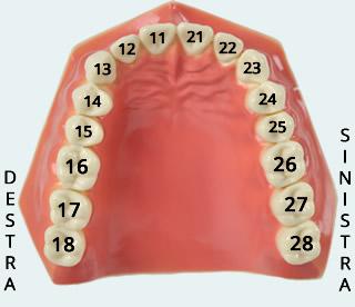 numerazione-denti